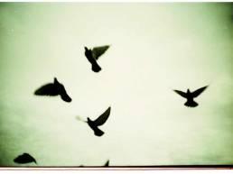 Alfreds Birds: Lomo LCA